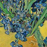 Irises-GAM115